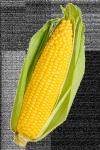 corny corn